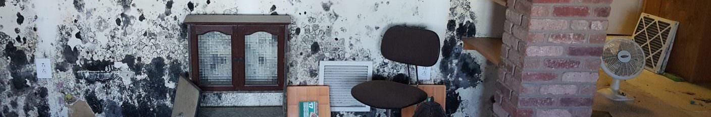 Mold Removal Services in Fort Collins Colorado